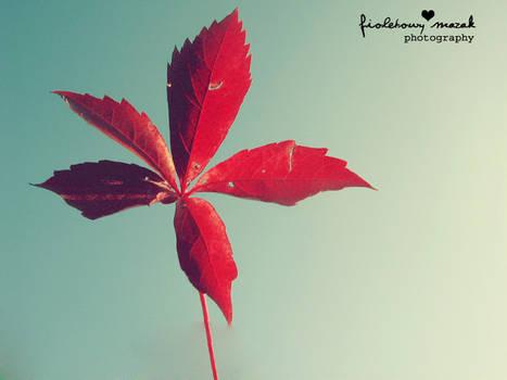 Autumn end