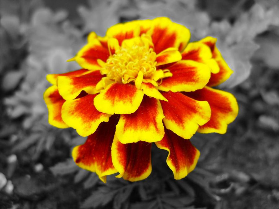 Fireflower 2 by Eternal-Afterglow