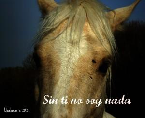Llovehorses's Profile Picture