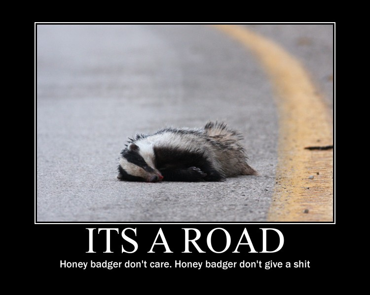 Donald Trump's campaign and the honey badger