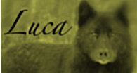 Luca header 2009 by evilness-2008