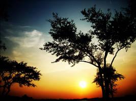 sunset tree by Patttycake