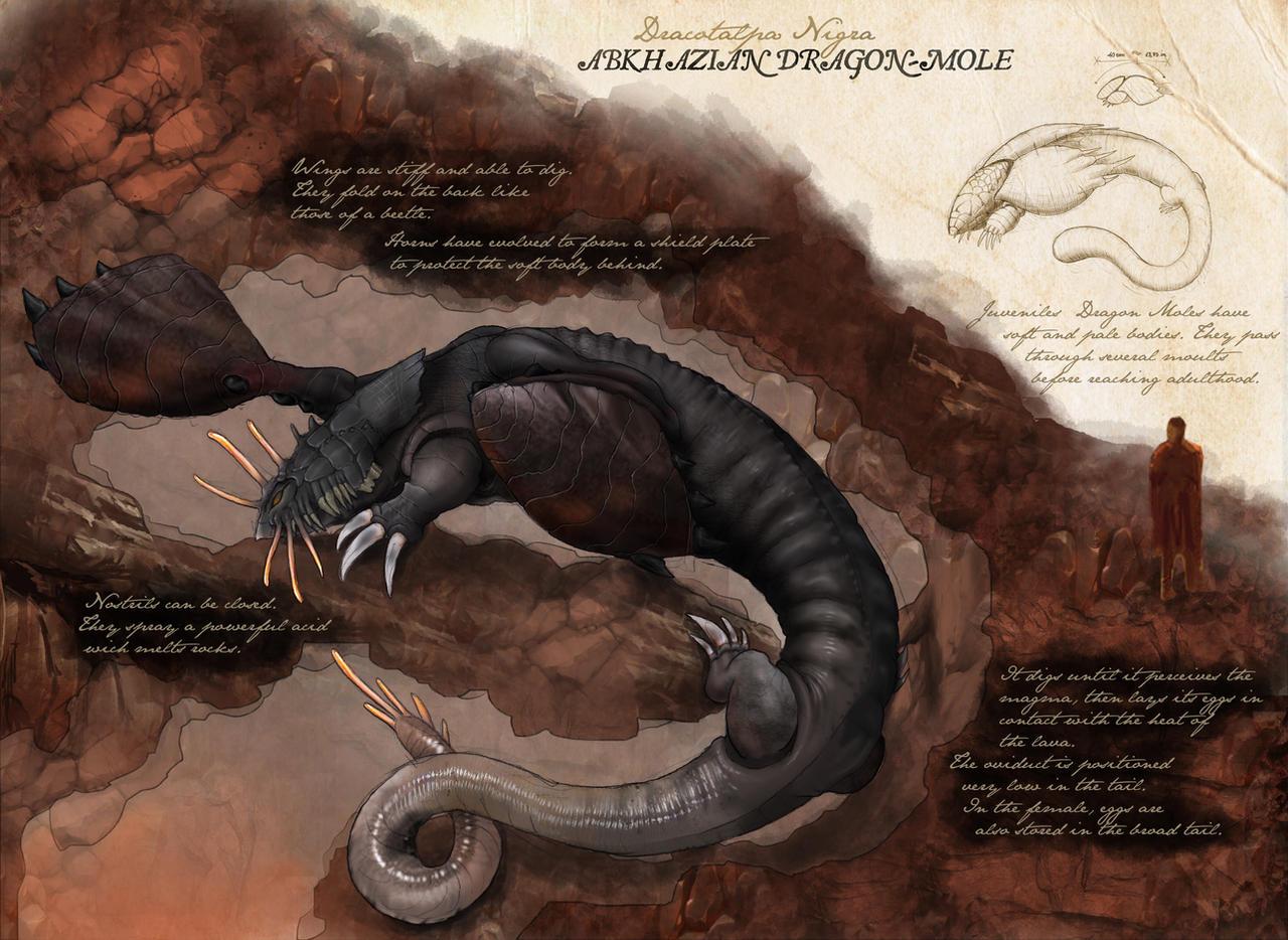 Mole Dragon by JackRover