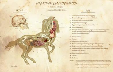 Anatomica Centauris by JackRover