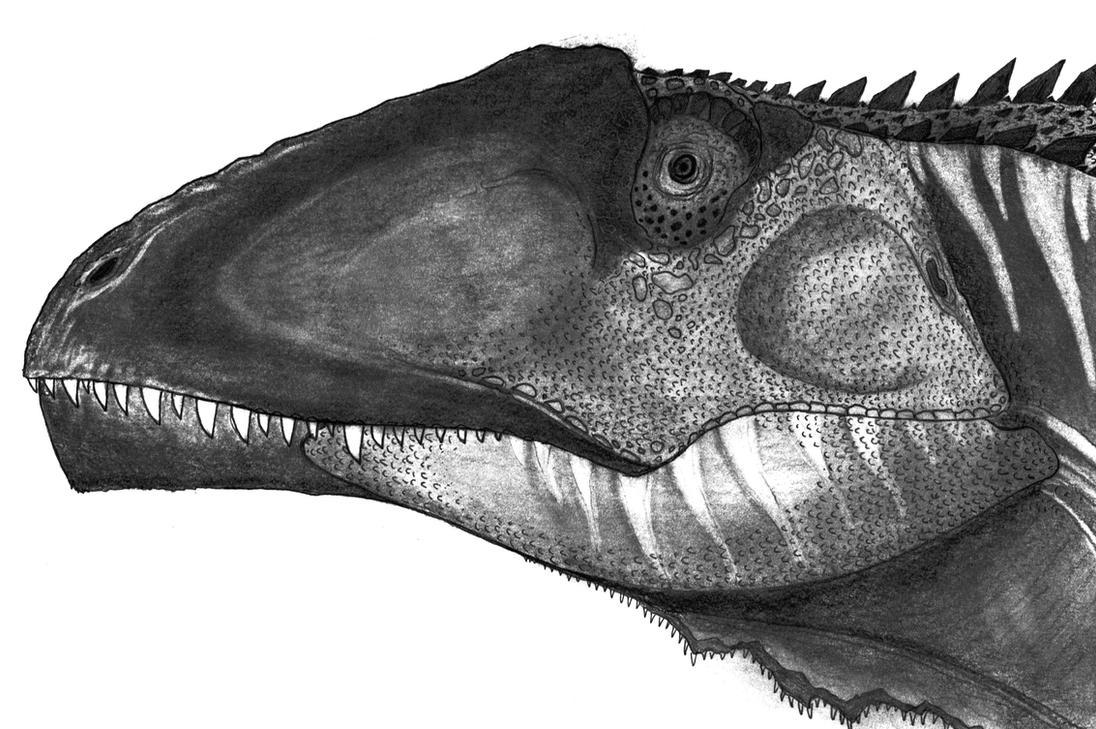 Giganotosaurus by Fragillimus335