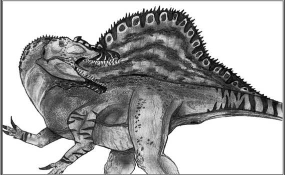 Spinosaurus m.
