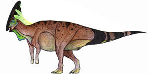 A Much More Average Charonosaurus
