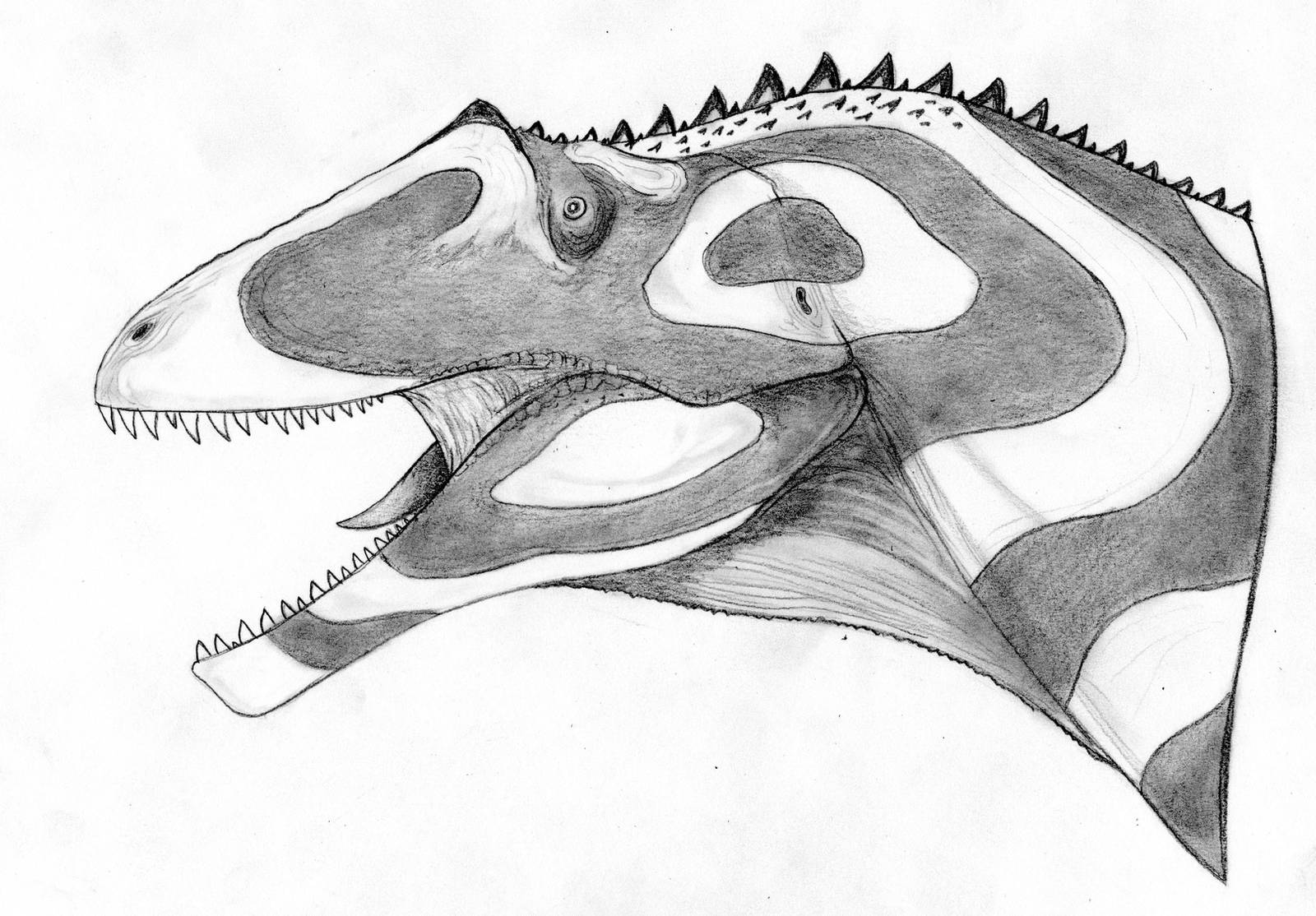 Saurophaganax maximus by Fragillimus335