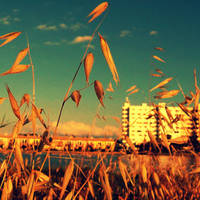 summer life by KCELphotography