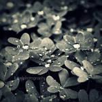 drop drop by KCELphotography