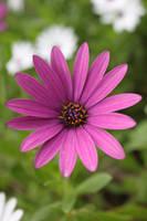 Purple Flower by MandyisDandy247