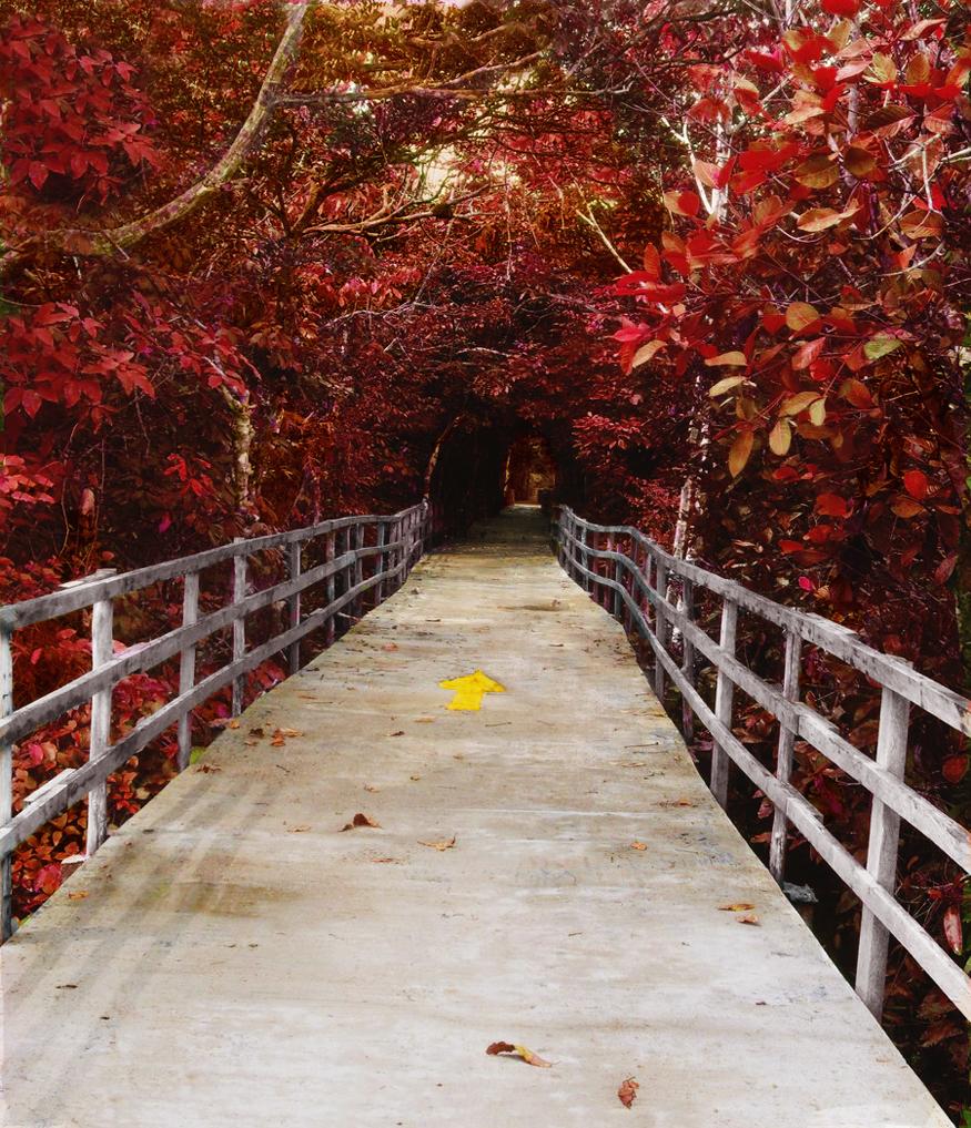 Autumn by MandyisDandy247