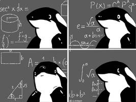 Confused Orca