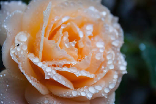 cant rain on nature