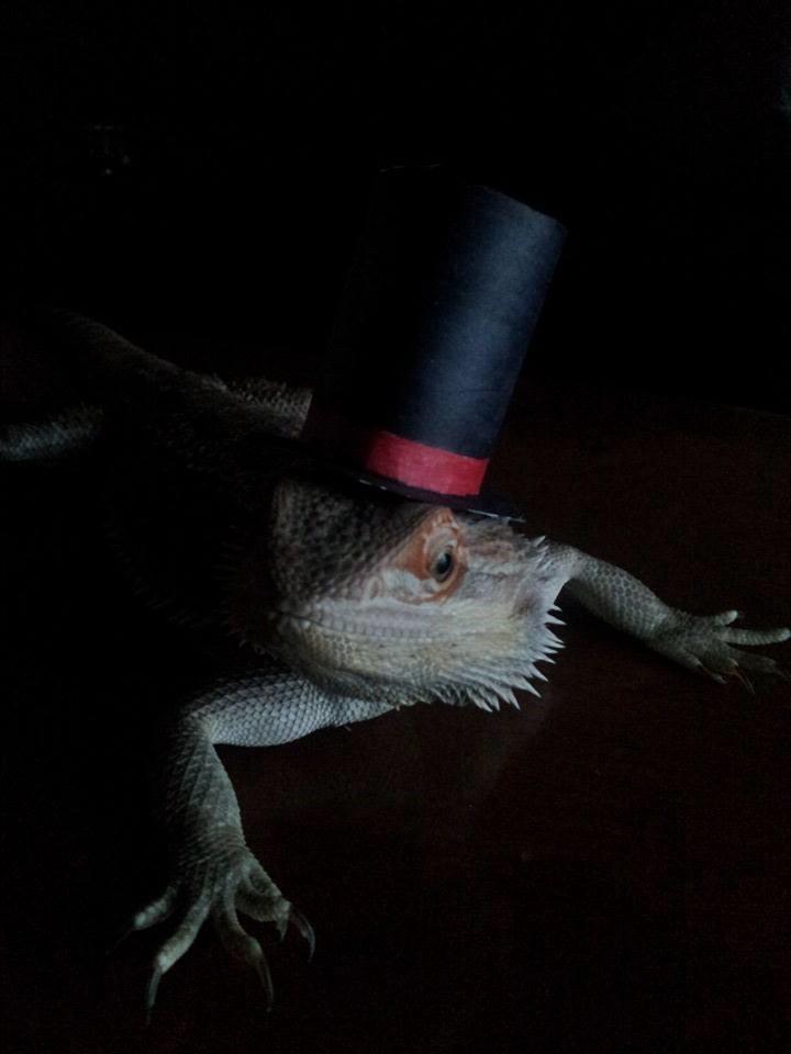 A Lizardly Gentleman by Kikeri-Ki