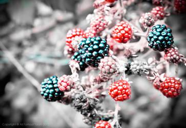 : Berry's : by AliTalahi