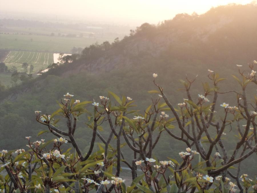 Mountain Flowers by PinkNazgul