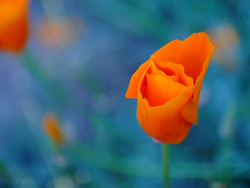 orange by turulato