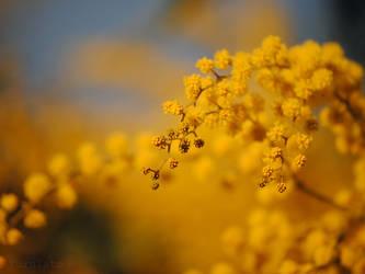 aromo by turulato