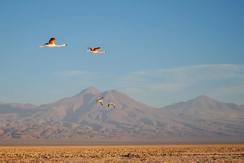 flamingos by turulato