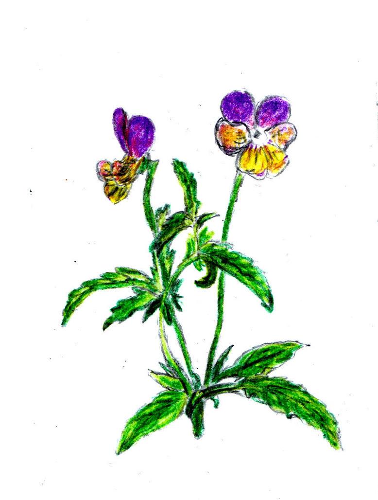 Flower by H3llzAng3l