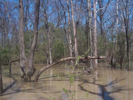 The flood 2