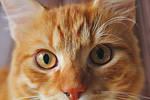 Sammys Eyes