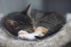 Sleeping Cinnamon Roll by TheEmpatheticCat