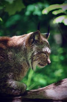 Dizzy Lynx