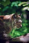 Dizzy Lynx by TheEmpatheticCat