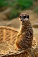 Have you seen Pumbaa?