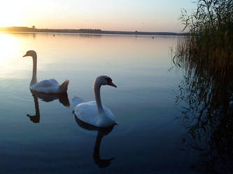 sunset with swans by vickii91