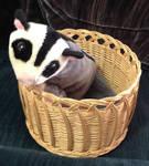 Sugar Glider Basket by SassyDragon18