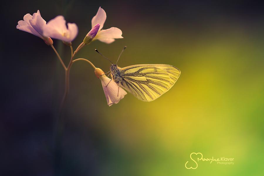 Lightbringer by MaaykeKlaver