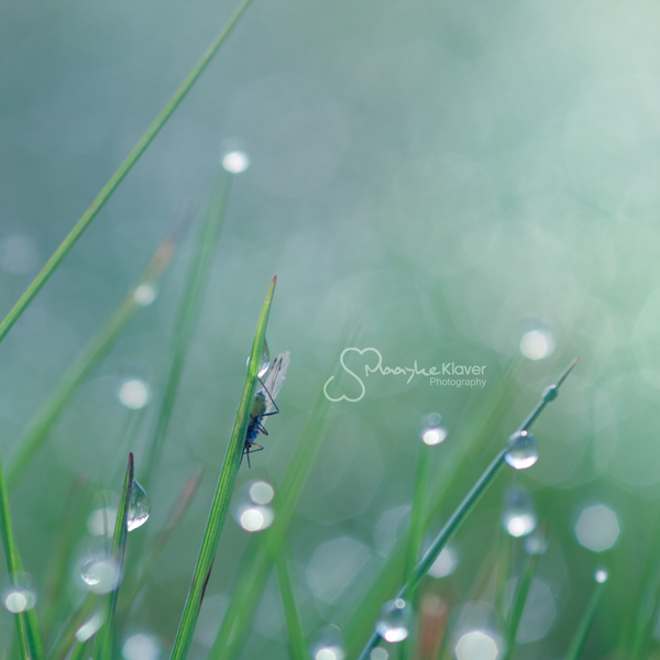 Droplet Memory by MaaykeKlaver