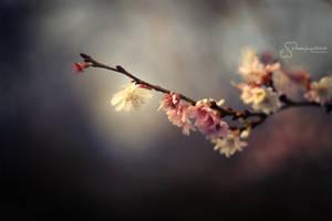 Sakura by MaaykeKlaver