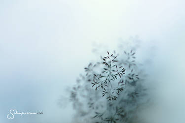 Winter settles in my heart