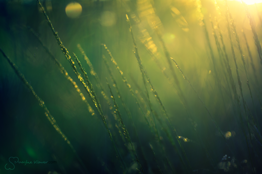 Whispering Grass by MaaykeKlaver