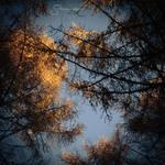 November Sunlight II