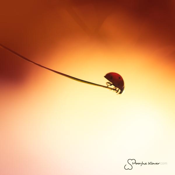 New Beginnings by MaaykeKlaver