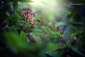 Bumblebee by MaaykeKlaver