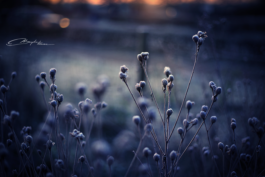 Early Morning Frost by MaaykeKlaver