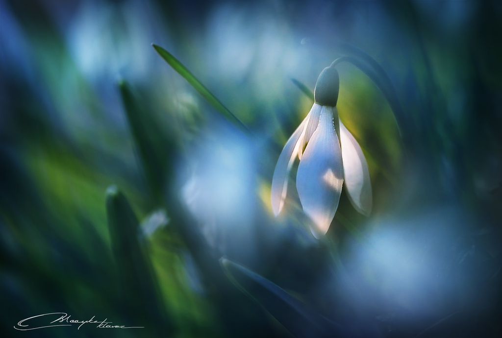 Little Lantern by MaaykeKlaver