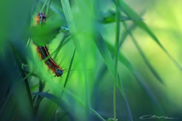 We are like caterpillars.. by MaaykeKlaver