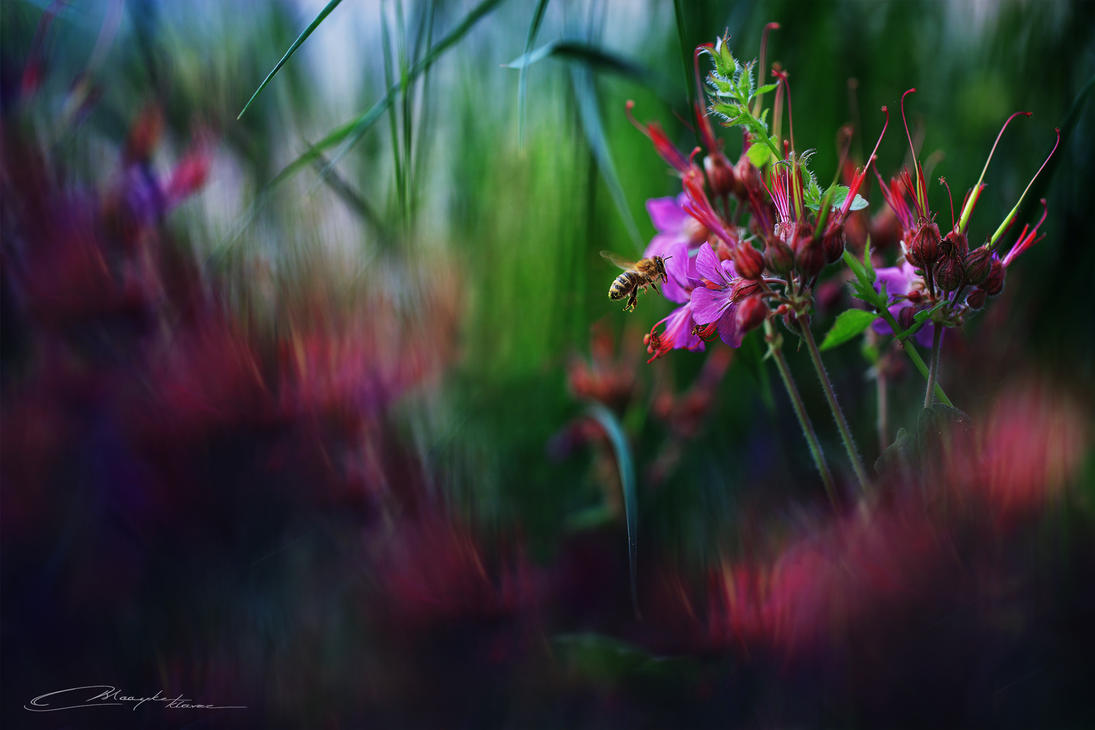 Pollination V by MaaykeKlaver