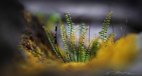 Tiny Sporelings by MaaykeKlaver