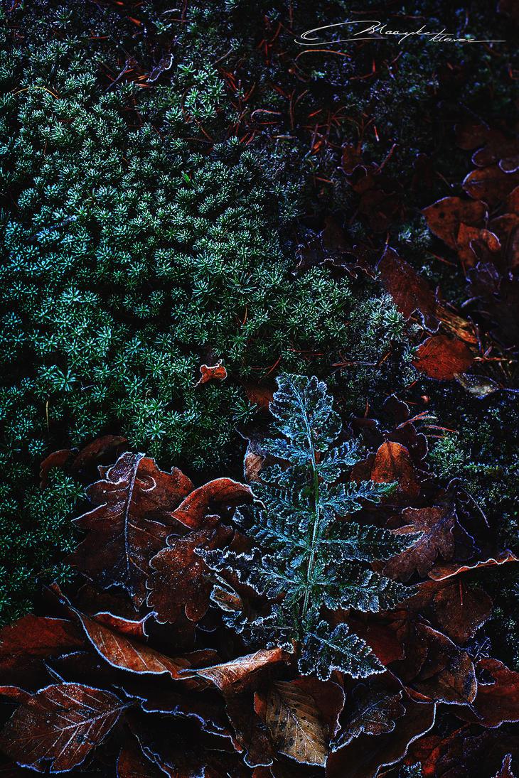 A strange longing for winter II by MaaykeKlaver