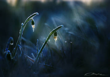 Ice lanterns by MaaykeKlaver