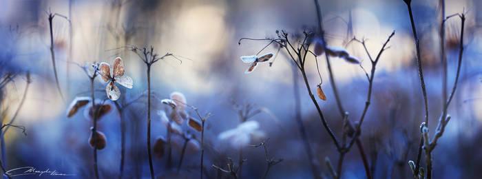 Wishing for winter