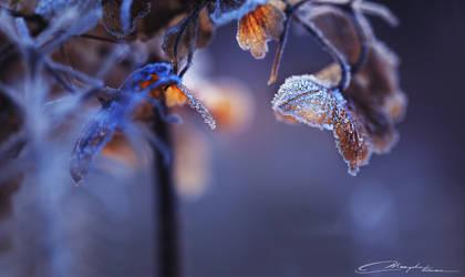Winter Lights by MaaykeKlaver
